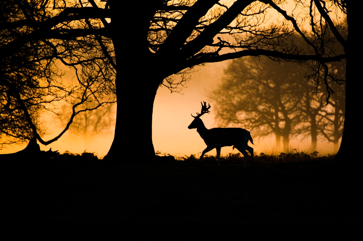 richmondparklondon Aaron Parsons Photography